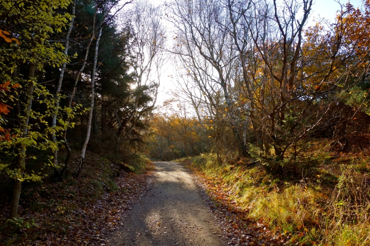 På vej mod Troldskoven