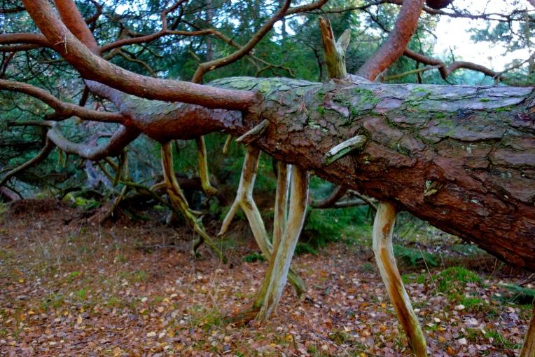 Træ eller uhyre