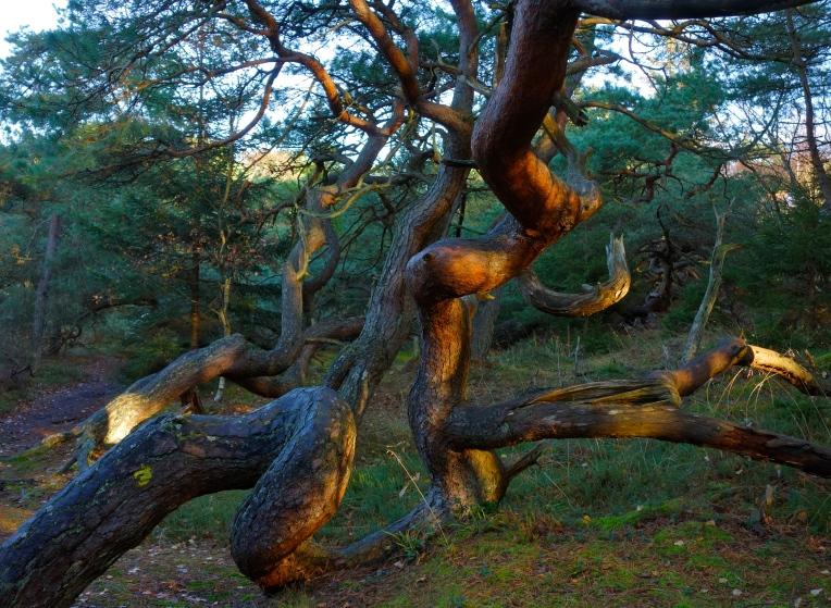 Troldeskoven