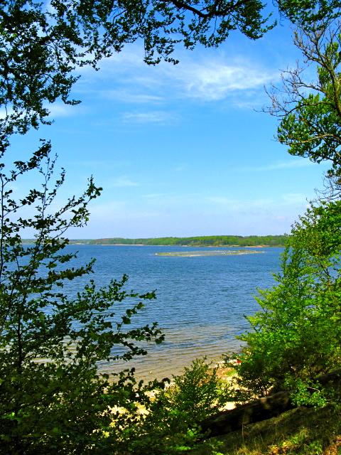 Ringøen