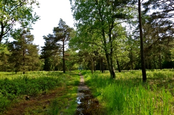 Sti ud til Lyngby Sø