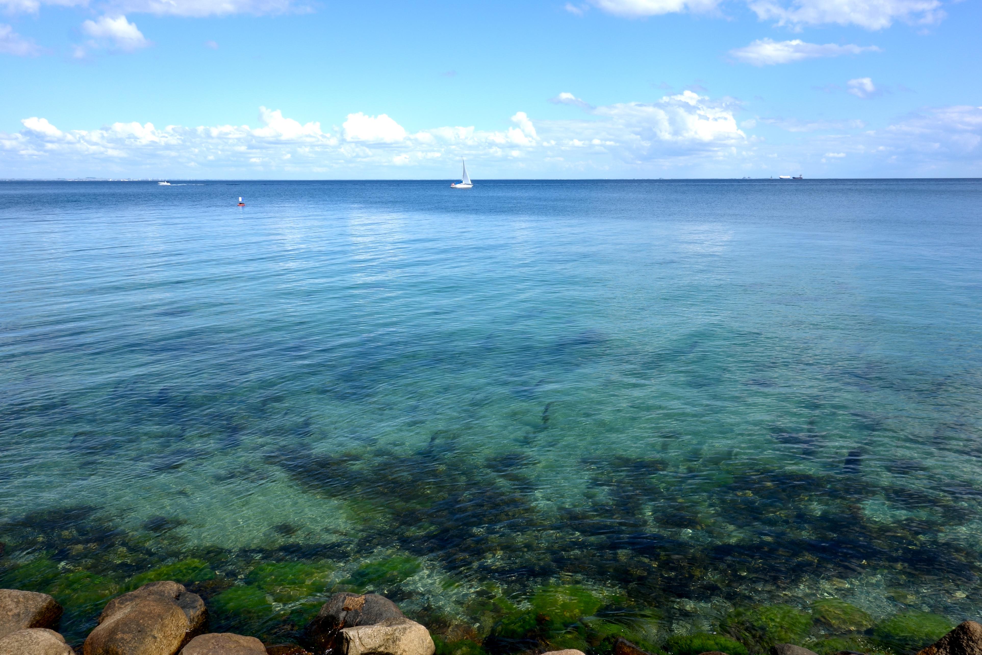Øresund ved Hvidørevej