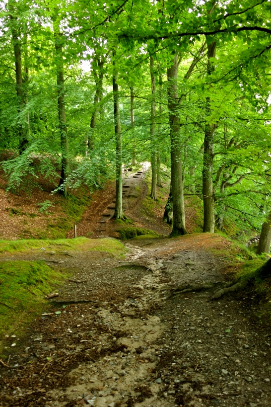 Hilly terrain in the beech forest