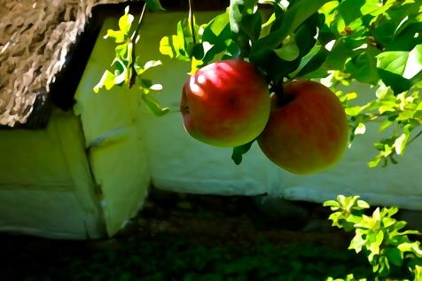 Stor æblehøst 2014