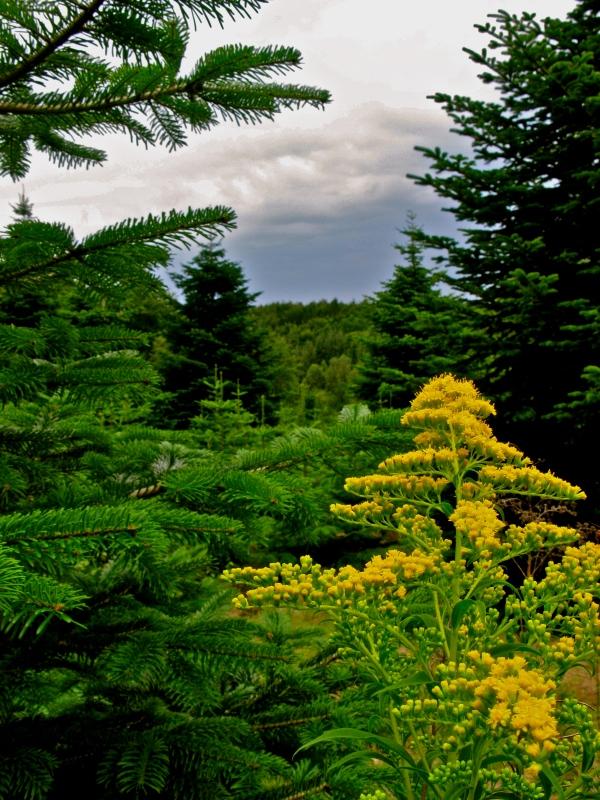Frederiksdal skov
