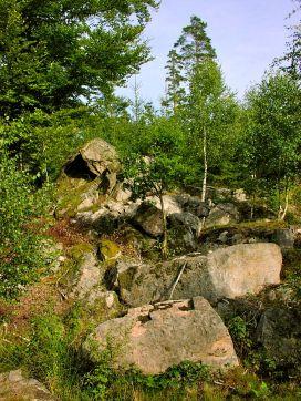 Skovområde ved Aljungen, Blekinge