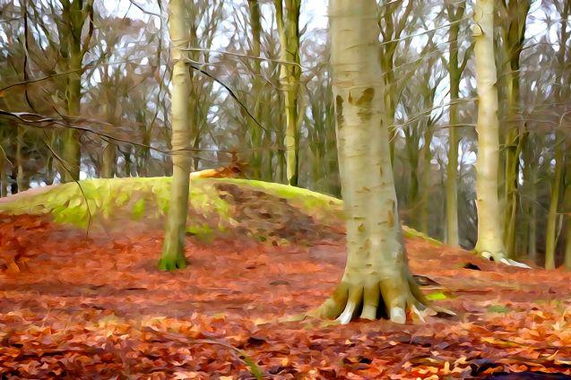 Ravnholm Skov