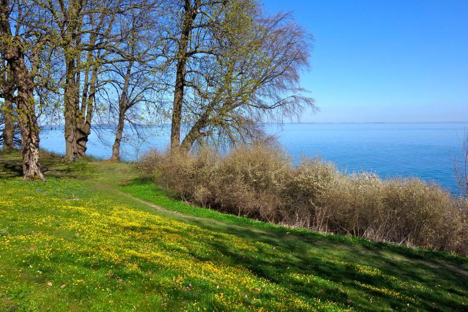 Spring Forbi