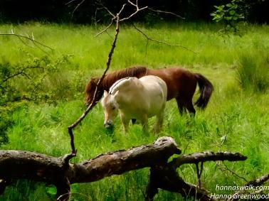 Heste på Krudtmølleengen
