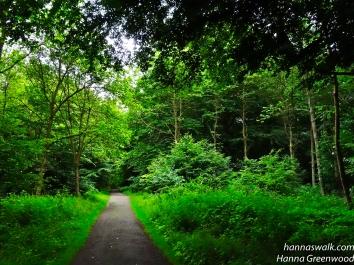 The peaceful forest, Jægersborg Dyrehave