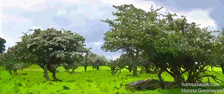 Eremitage Hawthorn