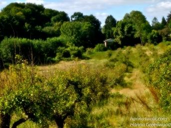 Ved Caroline Mathildestien, Æbleplantage