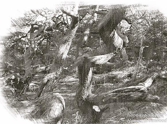 Troldeskoven, Tisvilde Hegn