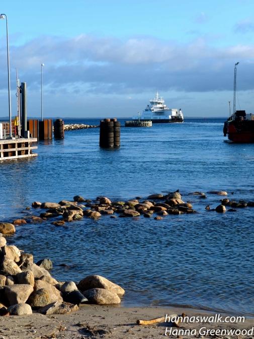 Færgen sejler mod Hundested