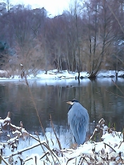 The Inspector :-) Grey Heron