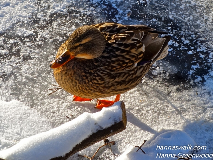 The Omen: The Duck