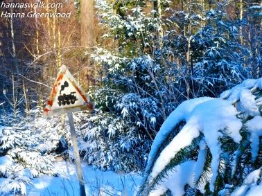 Skov mellem Mårum og Saltrup