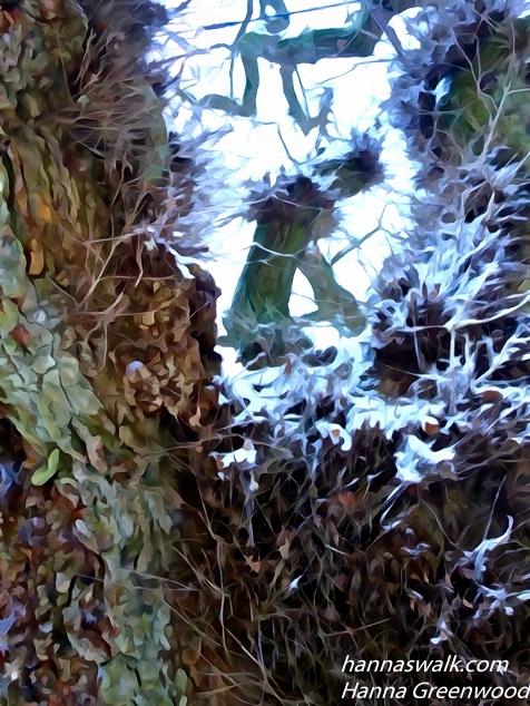 Klopstock's Oak