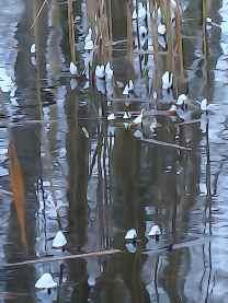 Isklokker i Frederiksdal Kanal