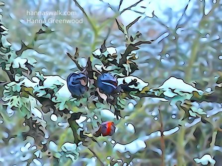 Lovely fruit for birds and humans