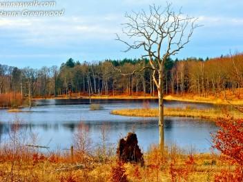 'Ravnesøen' - Stubbe Sø, Rude Skov