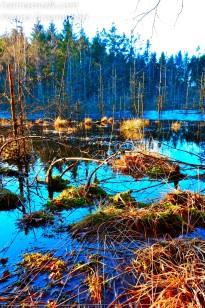 Sandskreds Soe, Gribskov