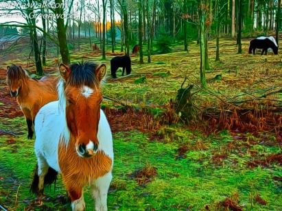 Horse at Sandskreds Soe