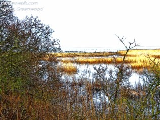 Naturreservatet Nivaa Bugt Strandenge