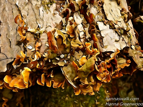 Træstrammer med svampe, Lyngby Åmose