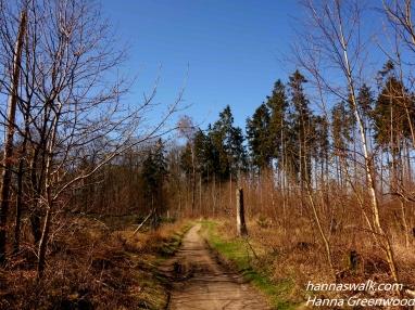 Brombær Nørreskov