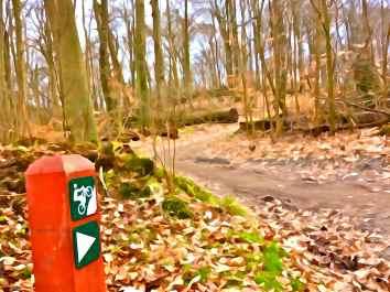 Vejen op til Maglebjerg, Rude Skov