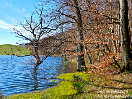 Nældesø, Skovene ved Buresø