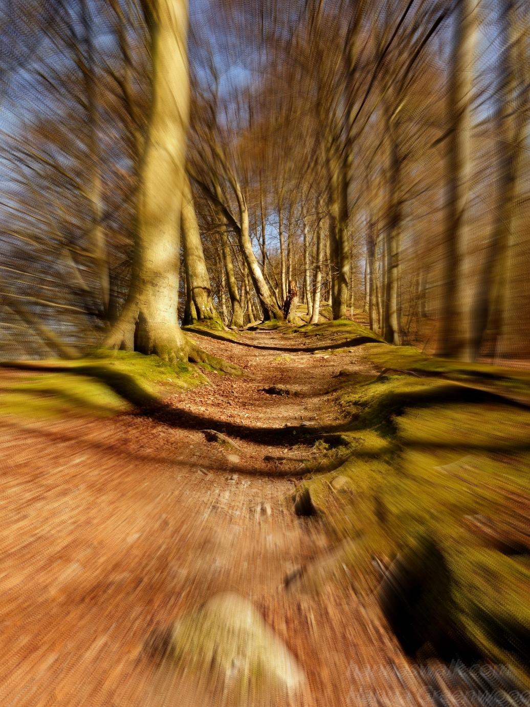 Fast walking - Nørreskoven