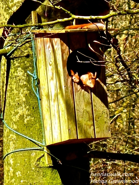 Egernunger