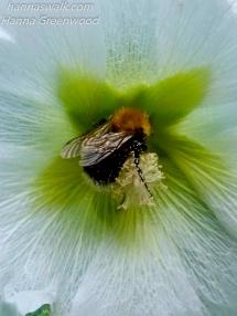 En lykkelig pollensamler