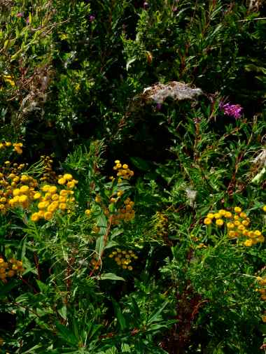Flowers along the coastline