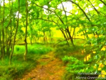 The Fairy Land