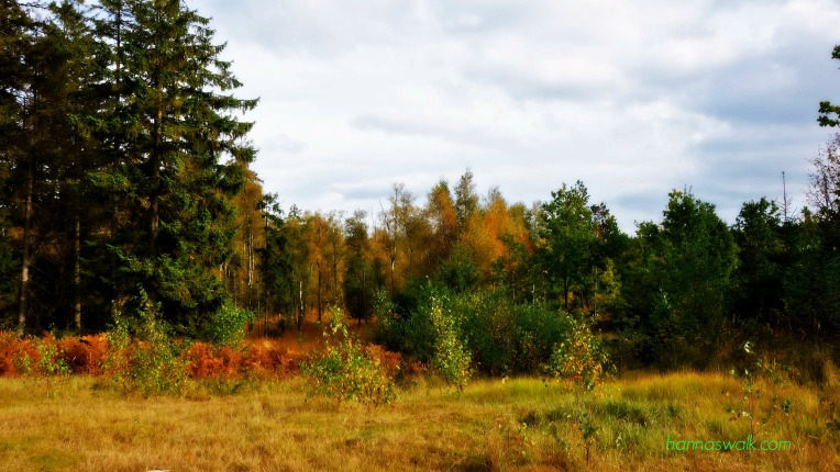 Gribskov