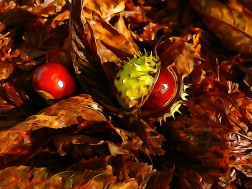 Chestnuts for the deer