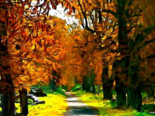 A beautiful path!