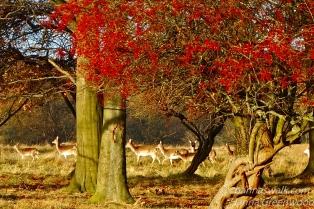 The plain of Hawthorn