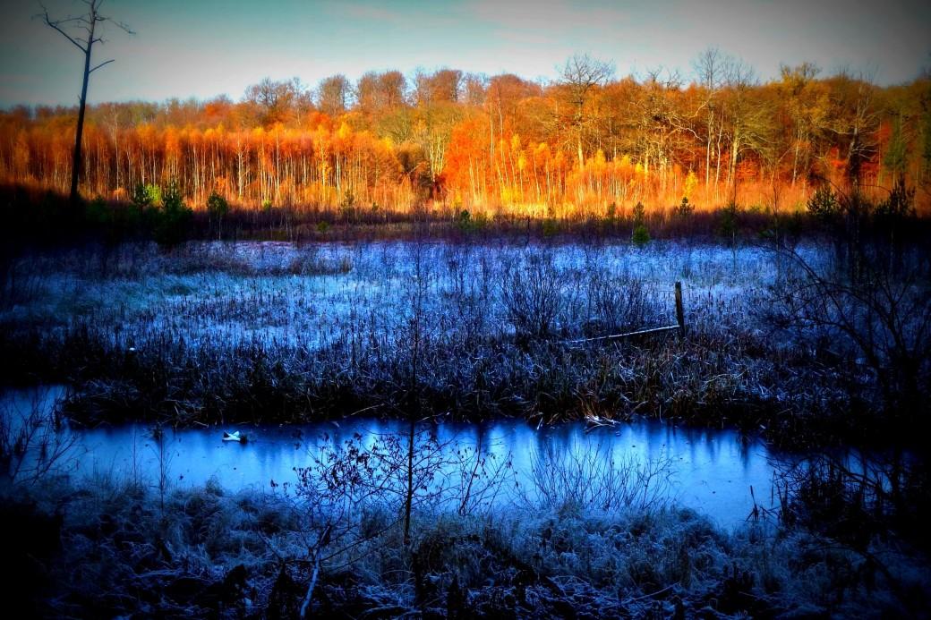 Frost i Rude Skov