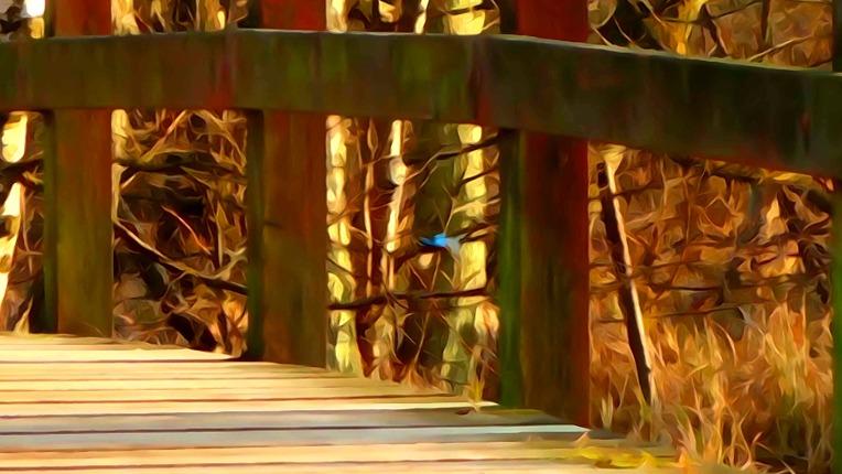 Kingfisher at the bridge