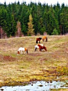 Gribskov, Sandskredssøen