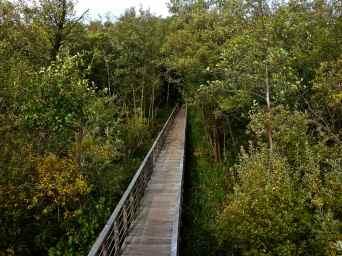 Bro til Fugletårn, Vaserne, Denmark