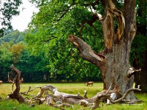 Christian 5.'s Oak, Jaegersborg Deer Park, Denmark