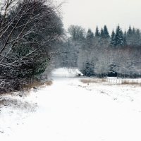 Go to the winter woods ...