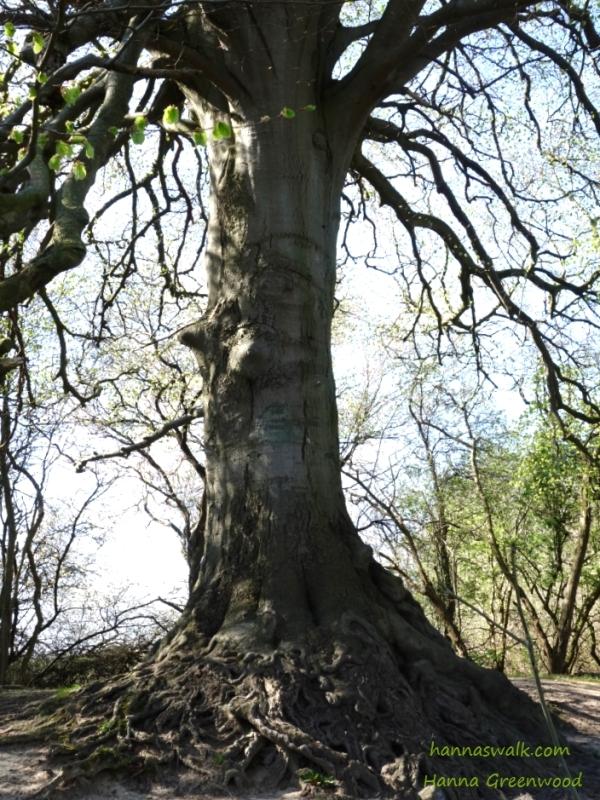 The Story tree