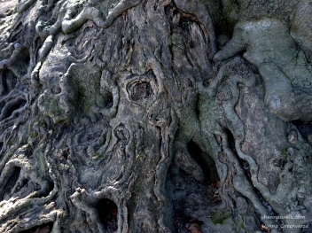 The Story Tree's roots