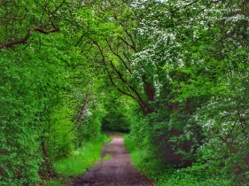 A path covered with hawthorns